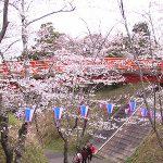 小見川城山公園の桜でお花見