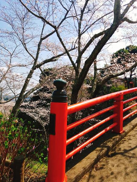水郷おみがわ桜つつじ祭り 城山公園 水郷のとりやさん
