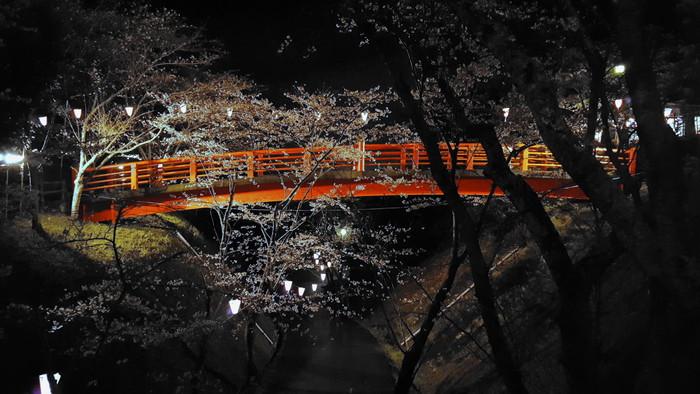 城山公園 夜桜