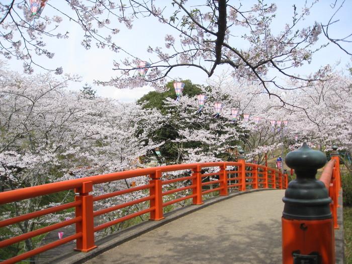 城山公園 桜