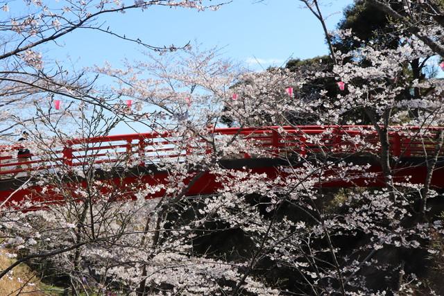 小見川城山公園 花見おすすめスポット 赤橋