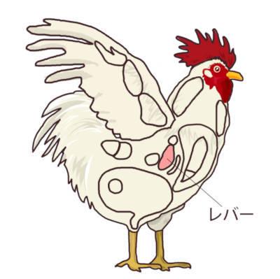 鶏肉の部位 レバーの位置