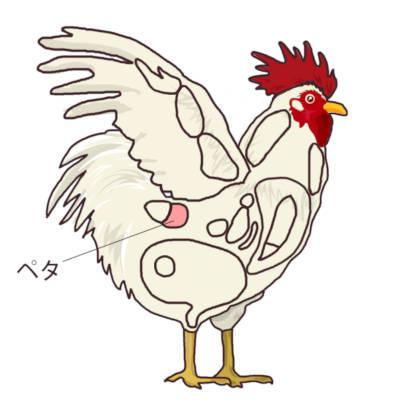 鶏肉の部位 ペタの位置