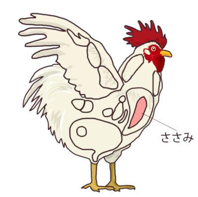 鶏肉の部位 笹身の位置
